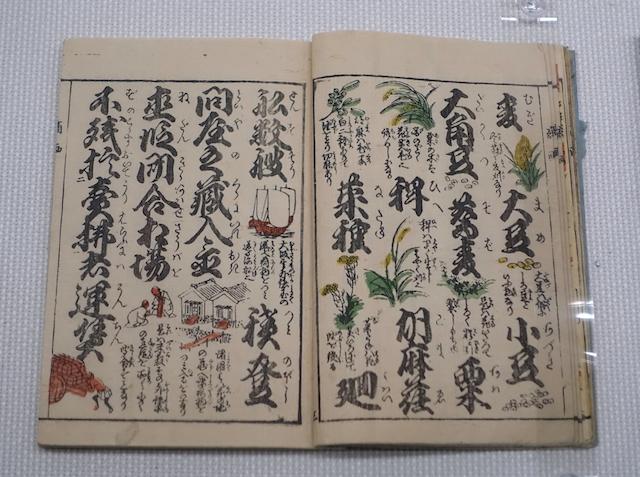 Doppelseite eines aufgeschlagenen Lesehefts aus der Edo-Zeit mit Abbildungen von Pflanzen: Erklärung von Getreidesorten und Bohnen.