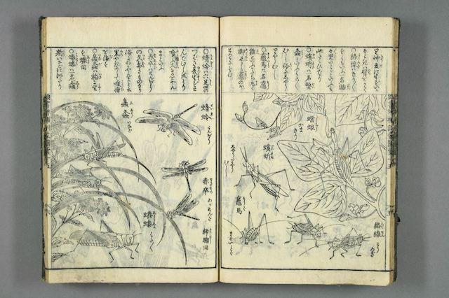 Doppelseite eines aufgeschlagenen Lesehefts aus der Edo-Zeit mit Abbildungen und Erklärungen zu Insekten.